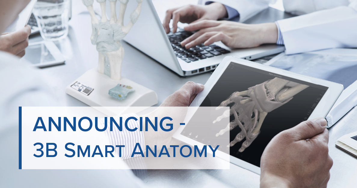 3B Smart Anatomy - the new generation of anatomical models by 3B Scientific
