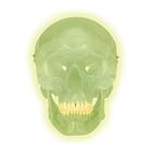 Модель черепа, светящаяся в темноте,A20/N