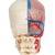 Модель черепа человека, комбинированный, с мозгом и позвоночником, BONElike™, 8 частей - 3B Smart Anatomy, 1000064 [A283], Модели черепа человека (Small)
